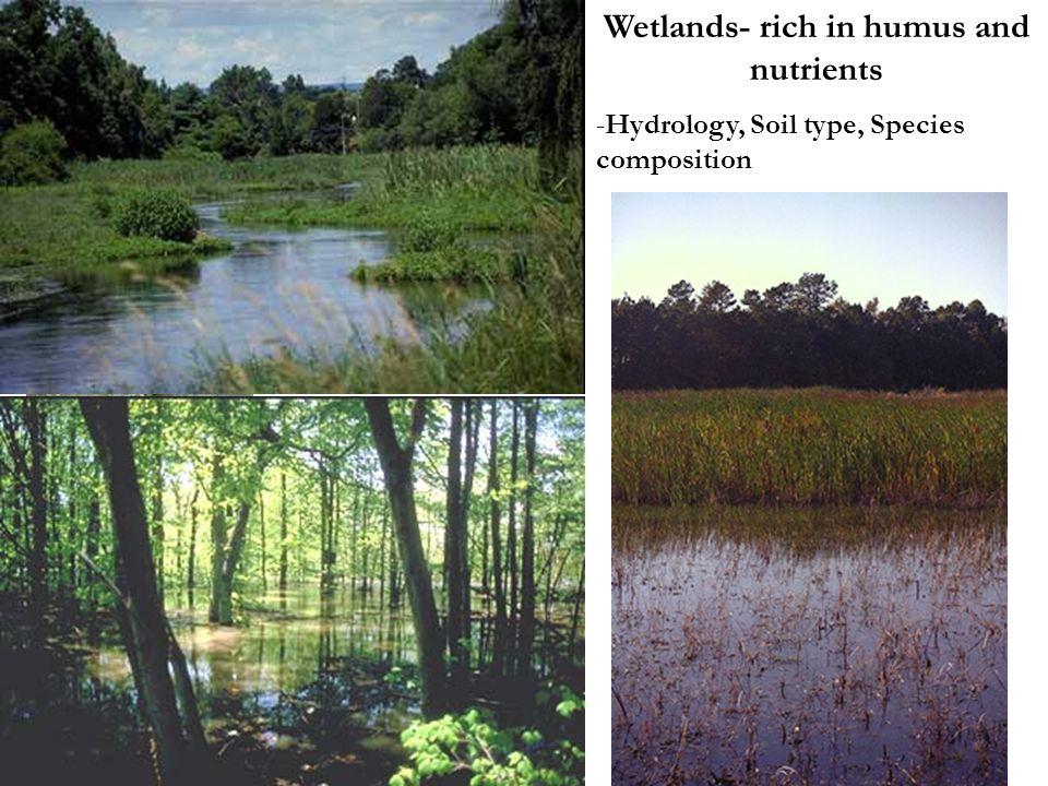 Wetlands- rich in humus and nutrients