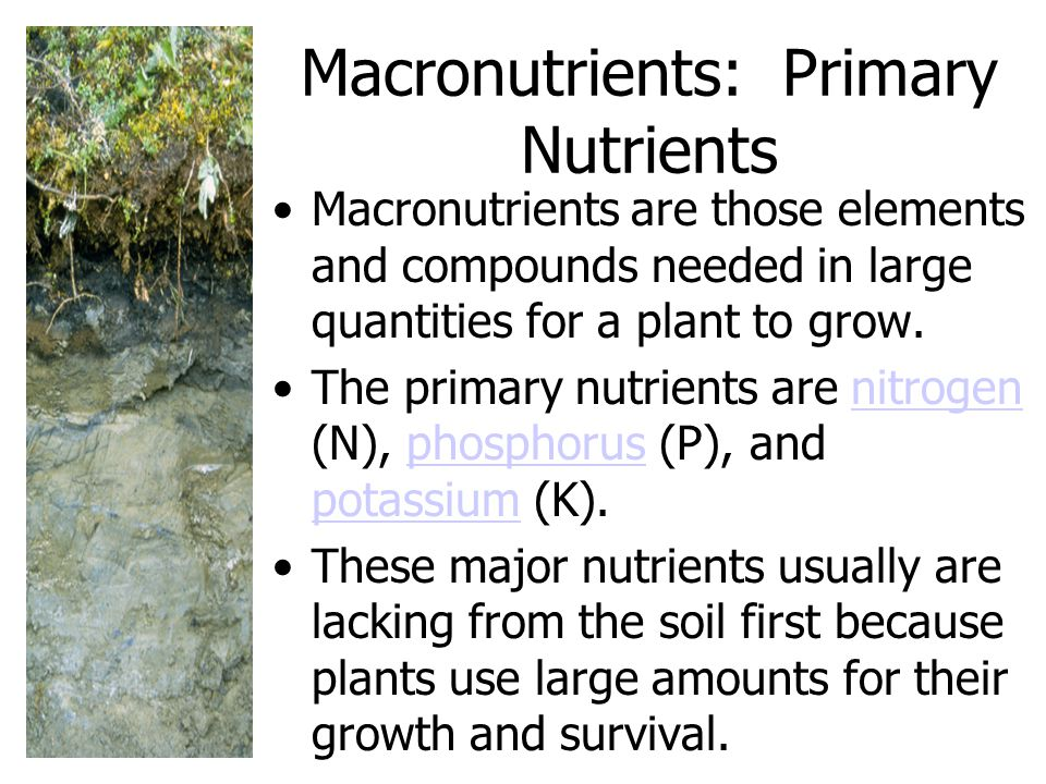 Macronutrients: Primary Nutrients