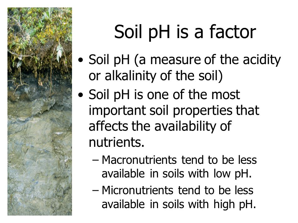 Soil pH is a factor Soil pH (a measure of the acidity or alkalinity of the soil)