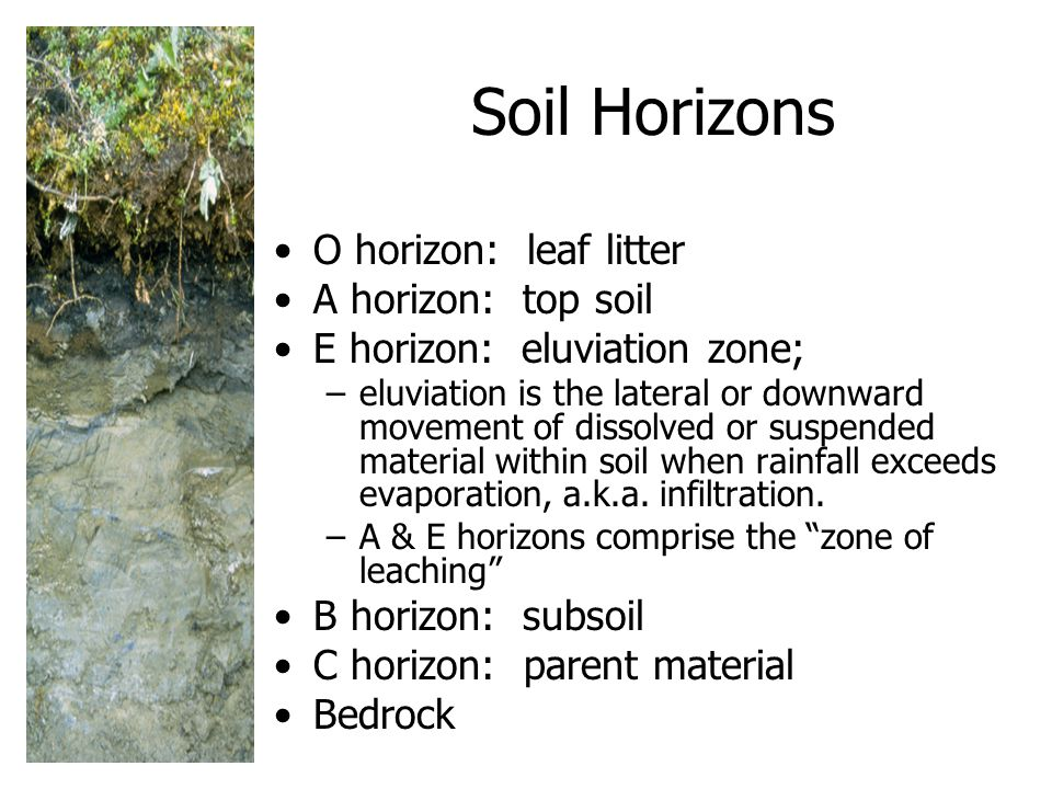 Soil Horizons O horizon: leaf litter A horizon: top soil