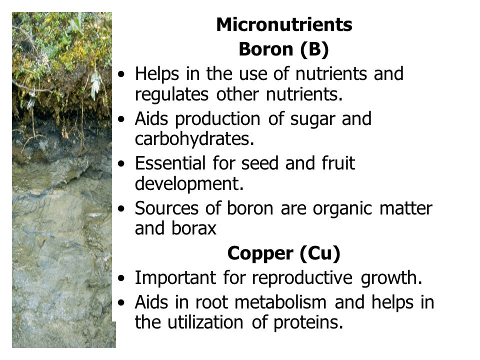 Micronutrients Boron (B) Helps in the use of nutrients and regulates other nutrients. Aids production of sugar and carbohydrates.