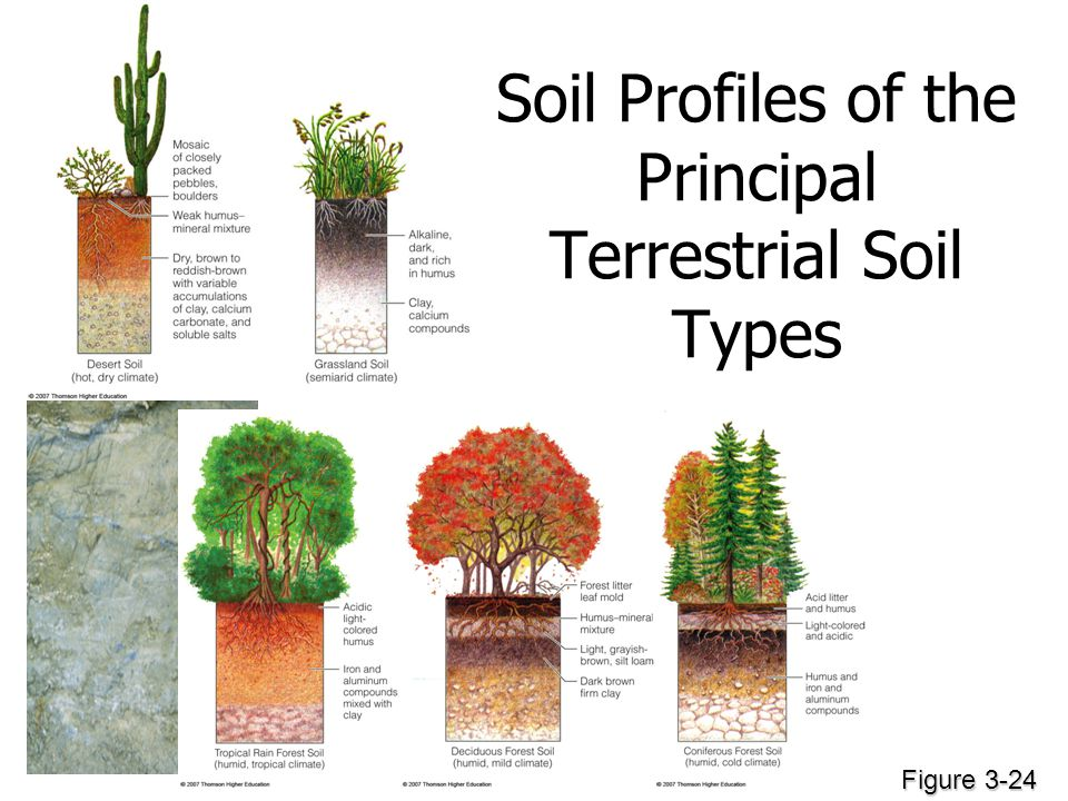 Soil Profiles of the Principal Terrestrial Soil Types