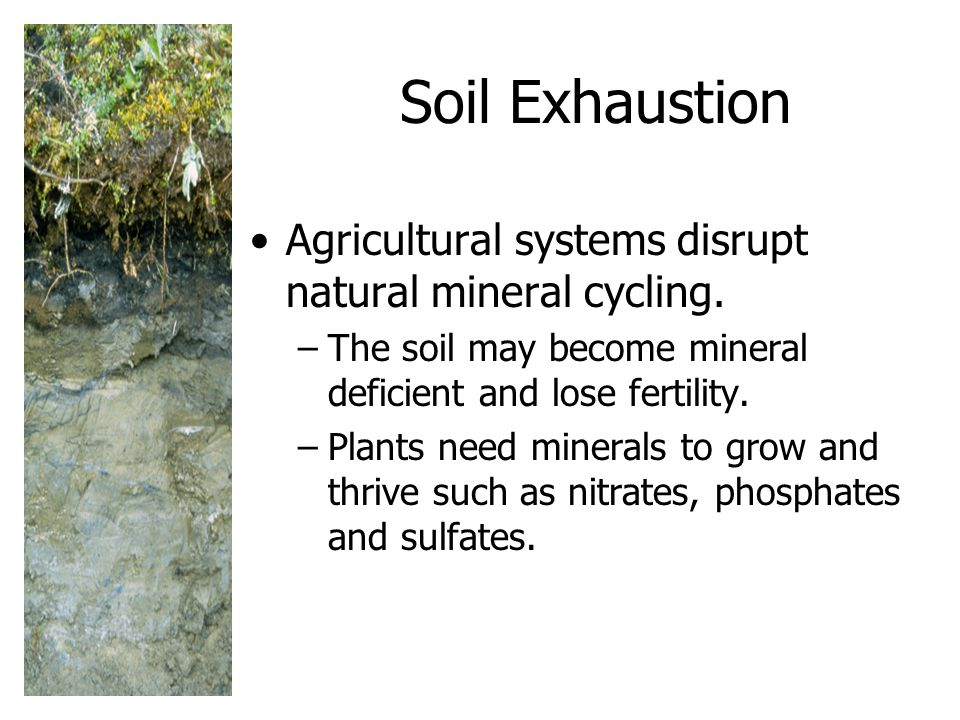 Soil Exhaustion Agricultural systems disrupt natural mineral cycling.