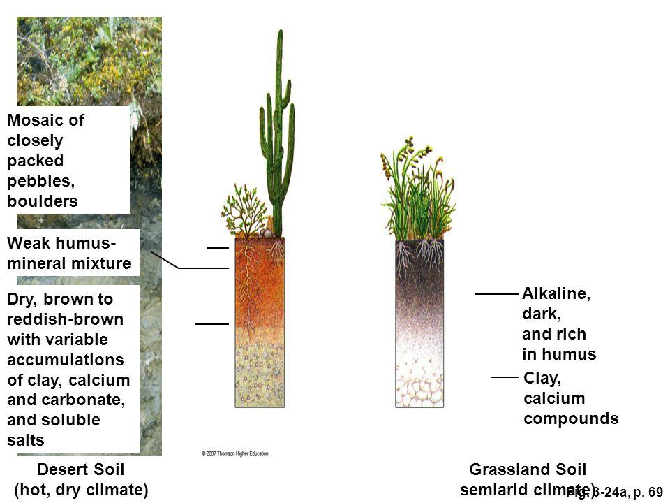 Desert Soil (hot, dry climate) Grassland Soil semiarid climate)