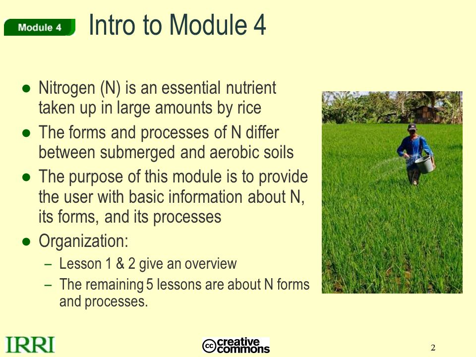 Intro to Module 4 Nitrogen (N) is an essential nutrient taken up in large amounts by rice.