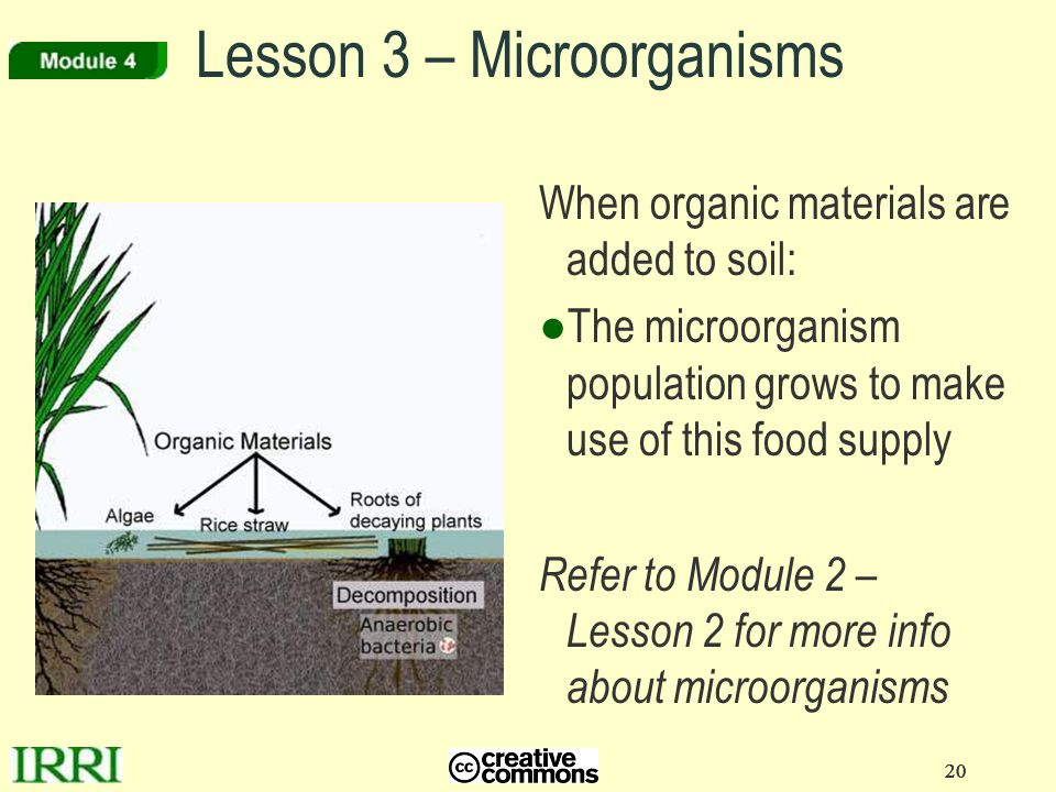 Lesson 3 – Microorganisms