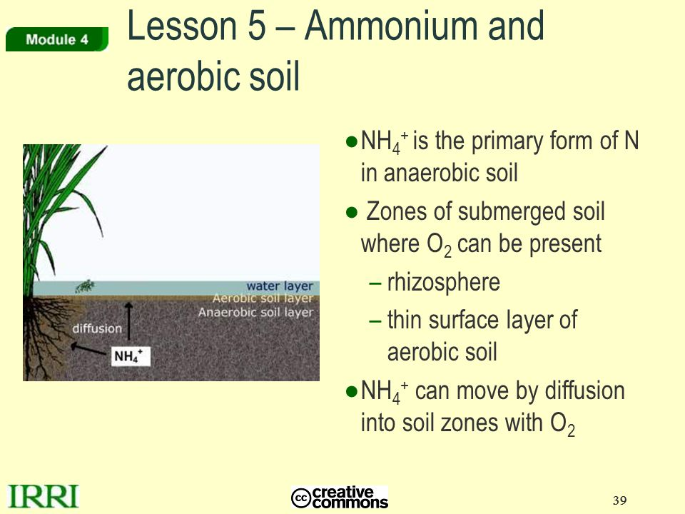 Lesson 5 – Ammonium and aerobic soil