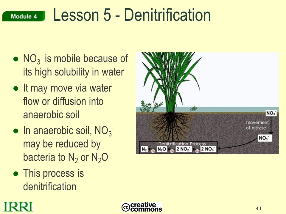 Lesson 5 - Denitrification