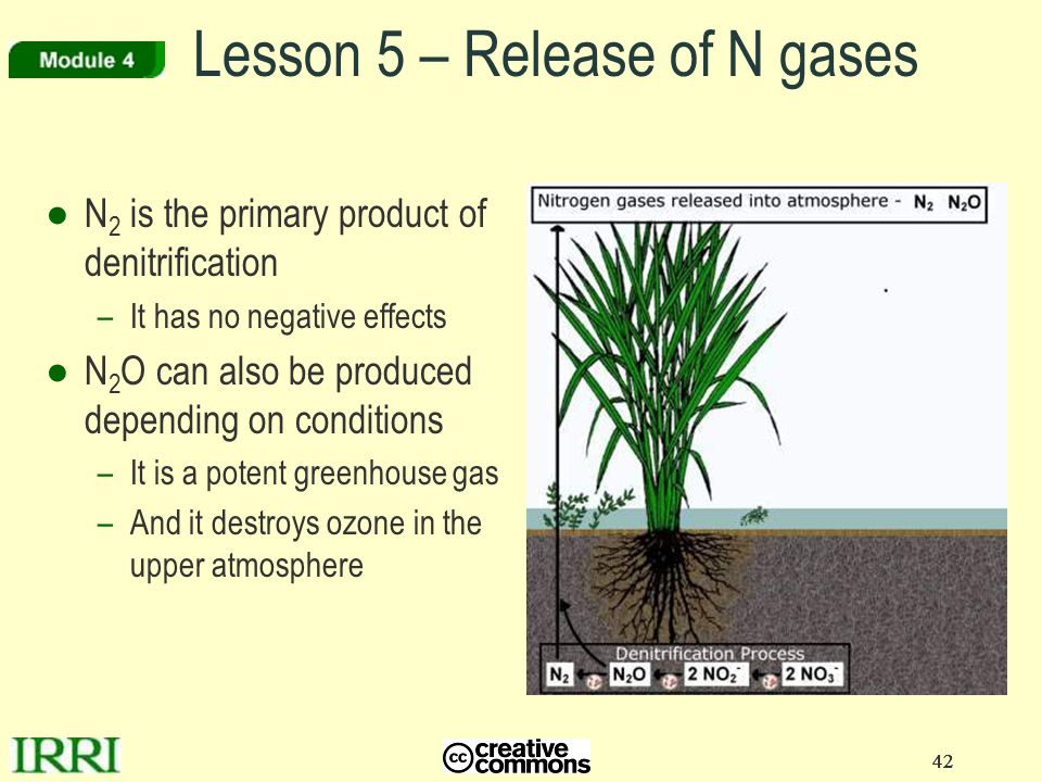 Lesson 5 – Release of N gases