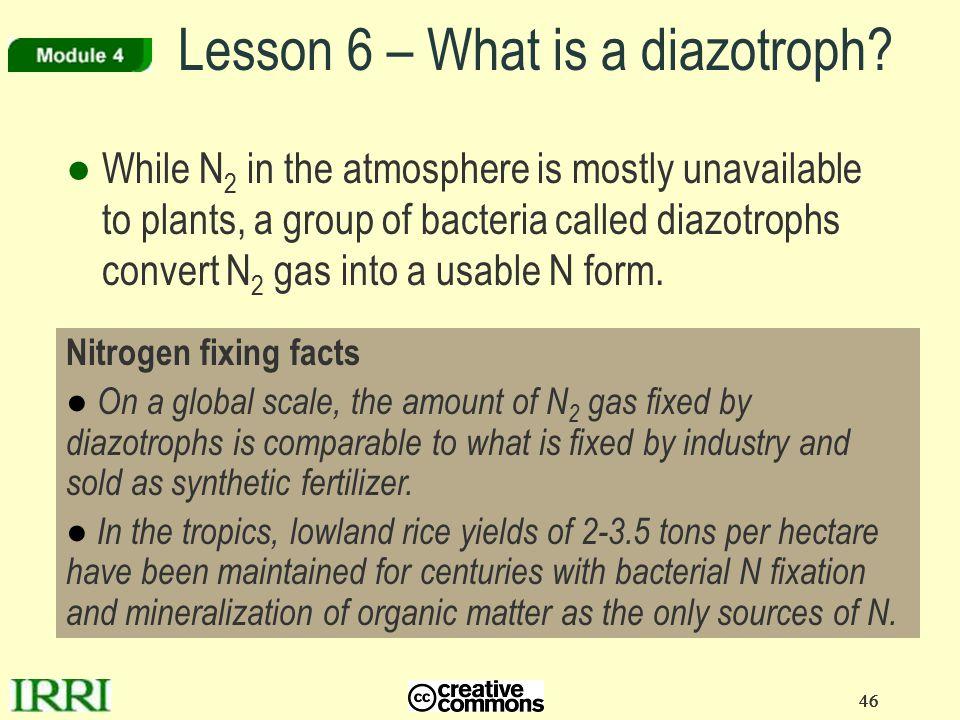 Lesson 6 – What is a diazotroph