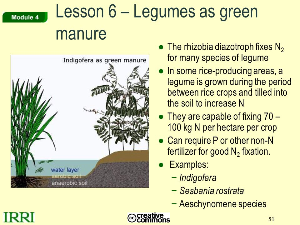 Lesson 6 – Legumes as green manure