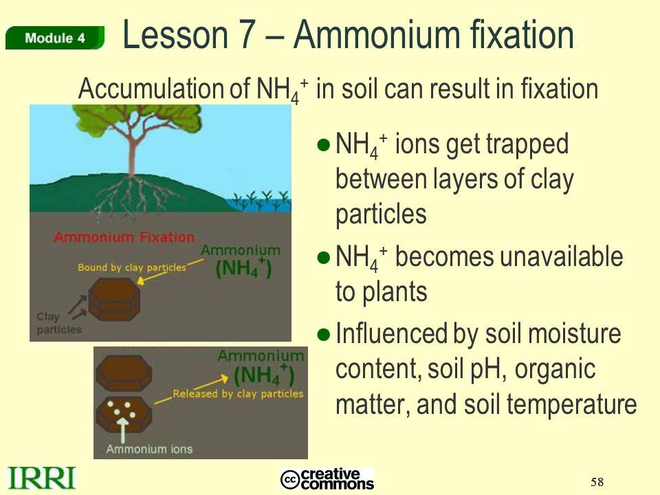 Lesson 7 – Ammonium fixation