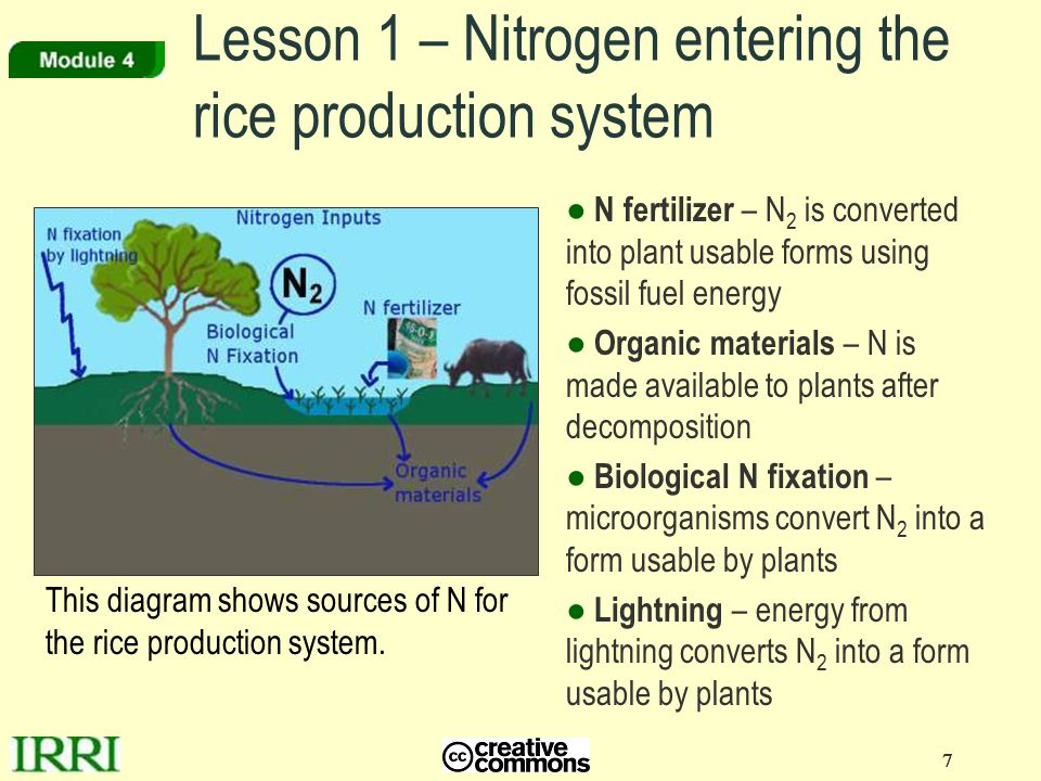 Lesson 1 – Nitrogen entering the rice production system
