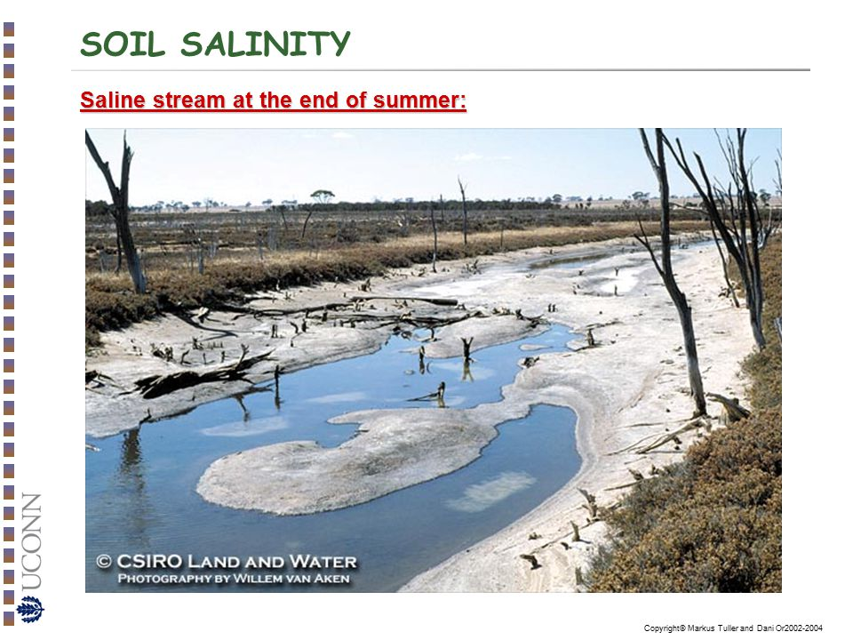 SOIL SALINITY Saline stream at the end of summer: