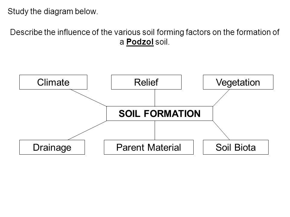 Climate Relief Vegetation SOIL FORMATION Drainage Parent Material