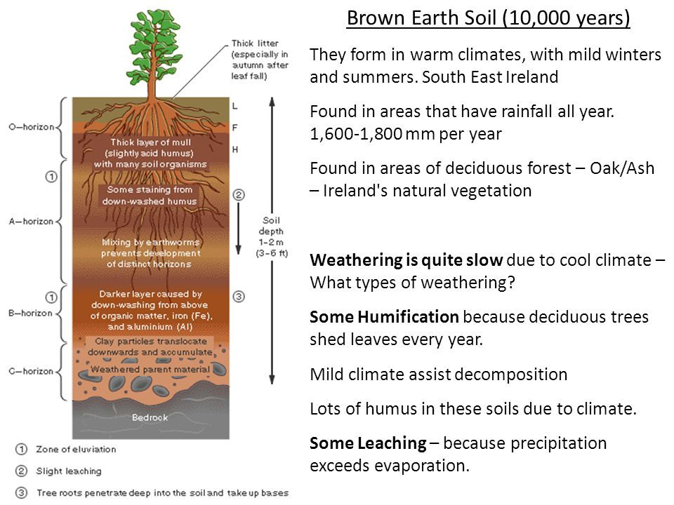 Climate relief vegetation soil formation drainage parent for Soil 2 year pgdm