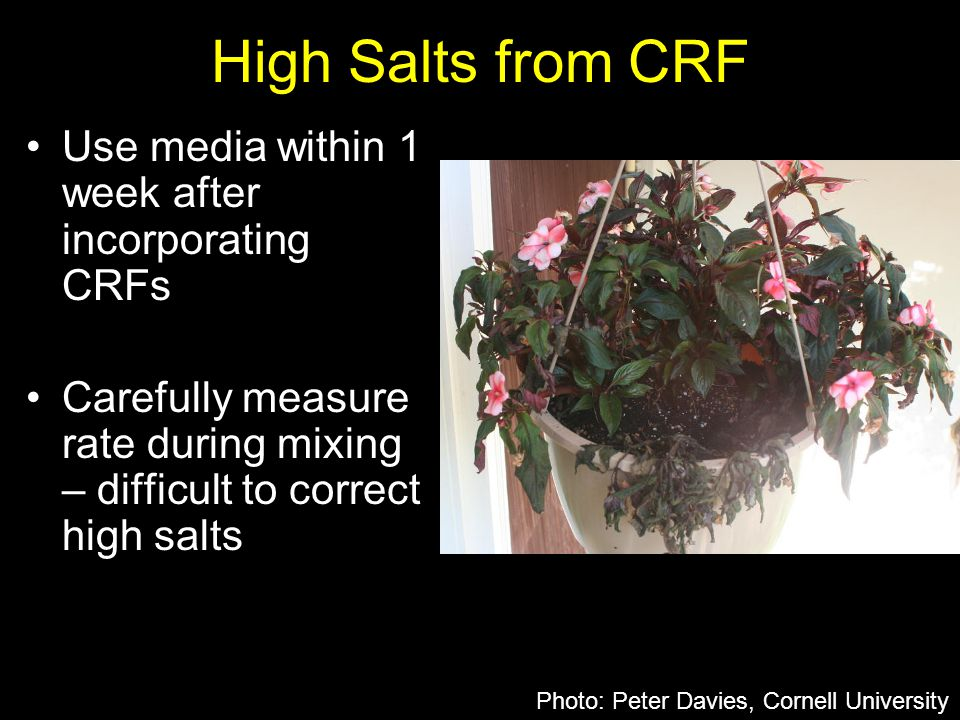 High Salts from CRF Use media within 1 week after incorporating CRFs