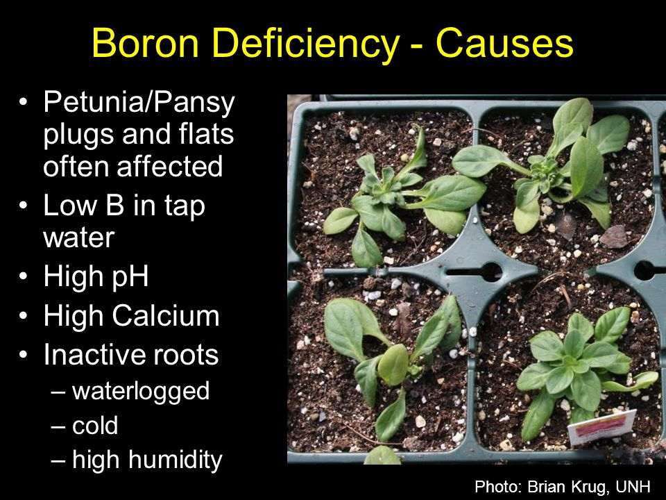 Boron Deficiency - Causes