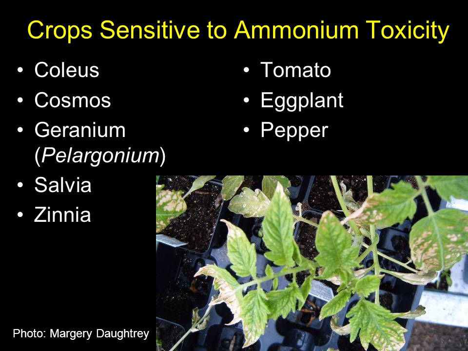 Crops Sensitive to Ammonium Toxicity