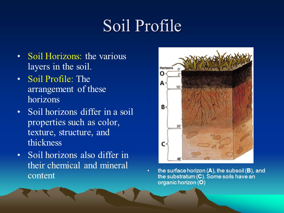 Soil Profile Soil Horizons: the various layers in the soil.