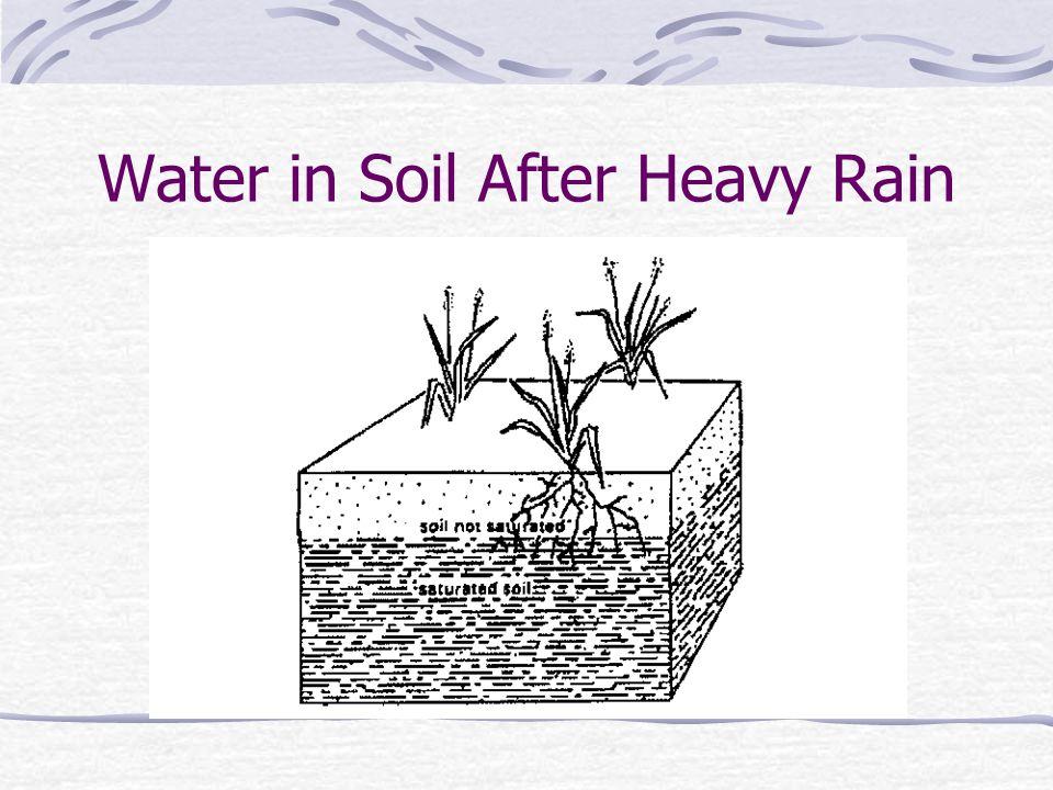 Water in Soil After Heavy Rain