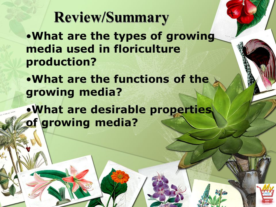 Review/Summary What are the types of growing media used in floriculture production What are the functions of the growing media