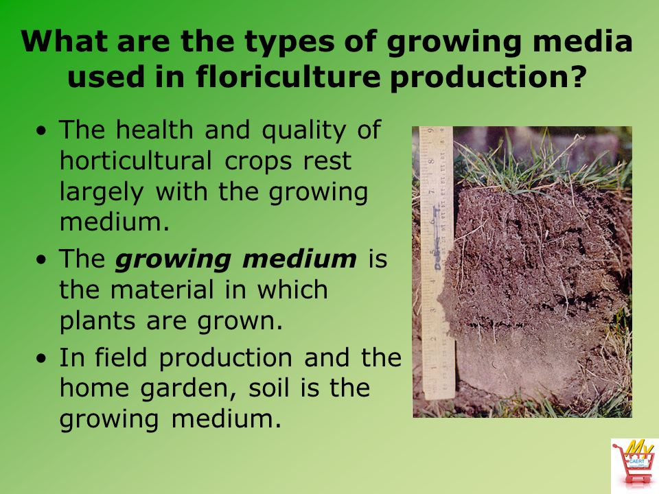 What are the types of growing media used in floriculture production