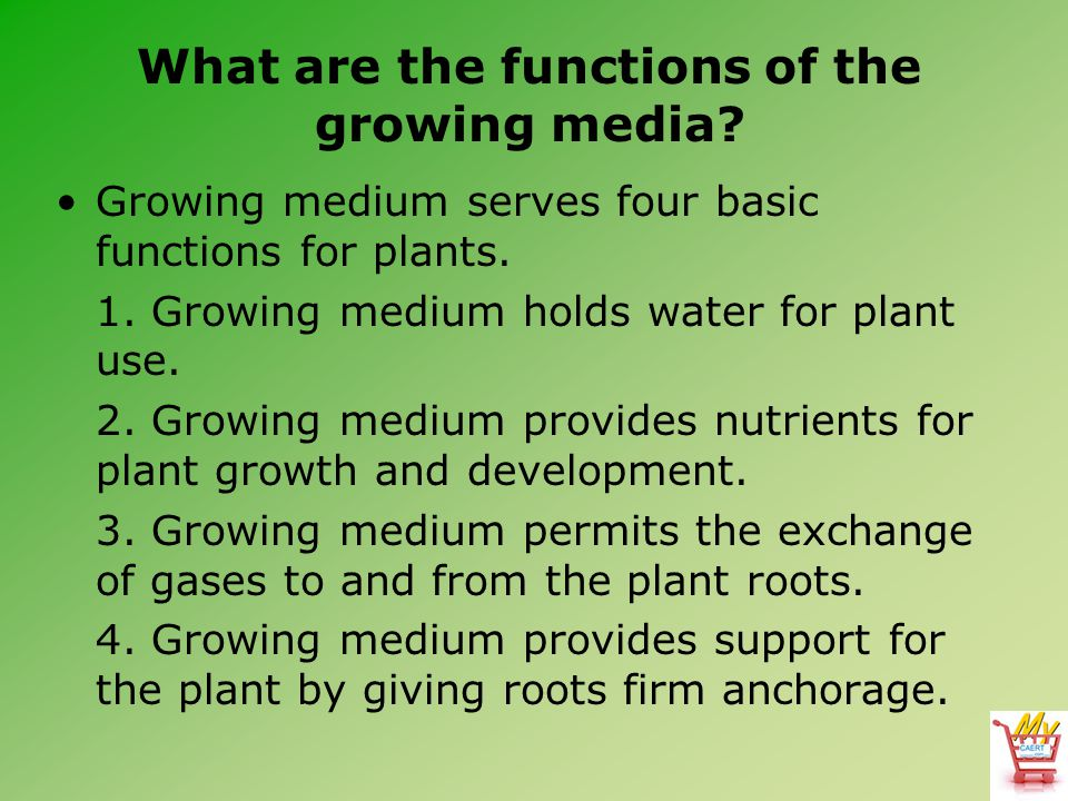 What are the functions of the growing media