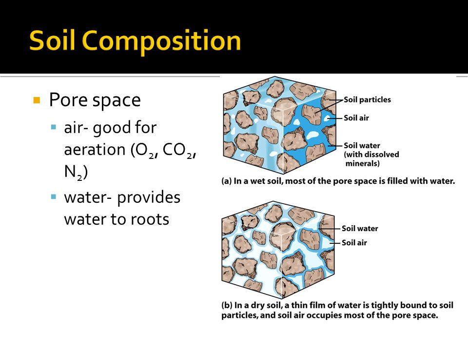 Soil Composition Pore space air- good for aeration (O2, CO2, N2)