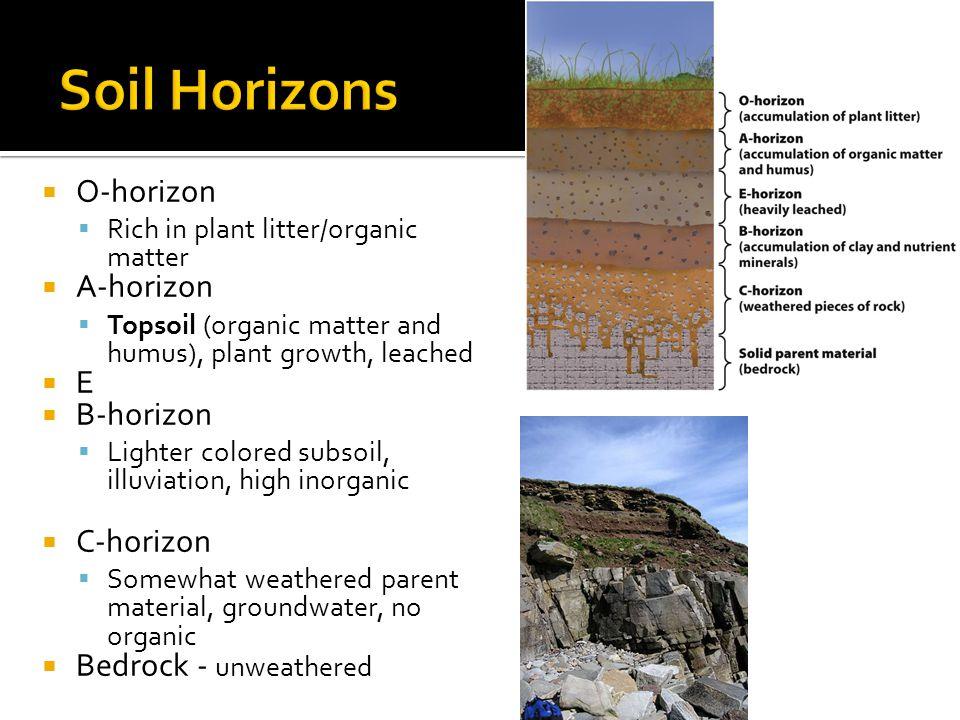 Soil Horizons O-horizon A-horizon E B-horizon C-horizon