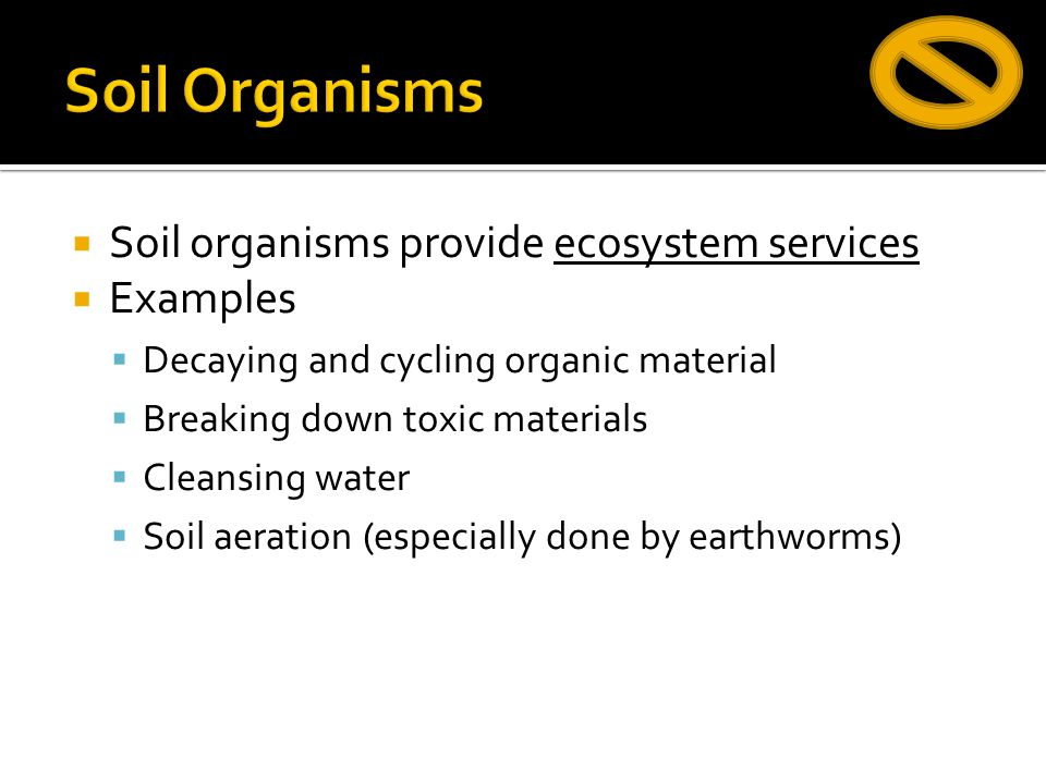 Soil Organisms Soil organisms provide ecosystem services Examples