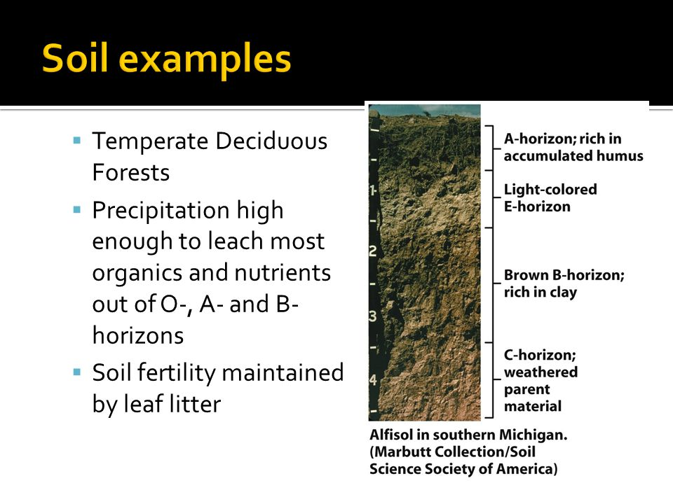 Soil examples Temperate Deciduous Forests