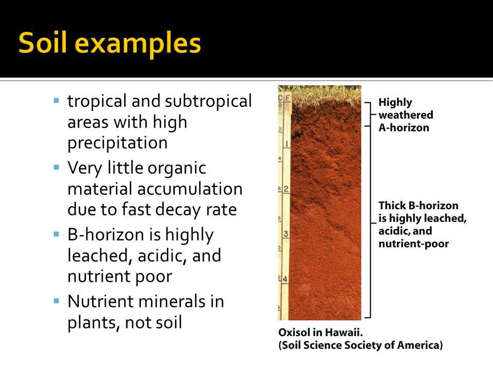 Soil examples tropical and subtropical areas with high precipitation
