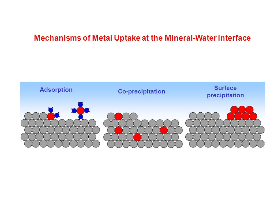 Mechanisms of Metal Uptake at the Mineral-Water Interface
