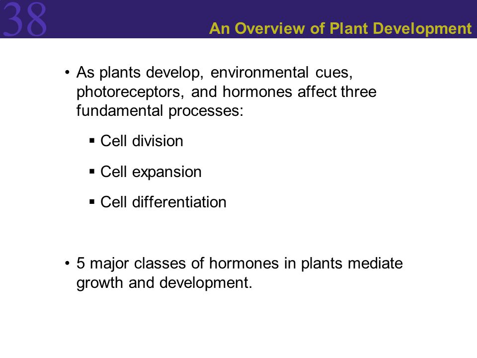 An Overview of Plant Development