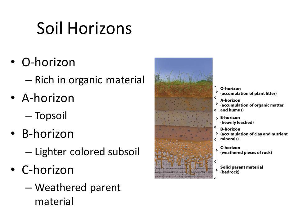 Soil Horizons O-horizon A-horizon B-horizon C-horizon