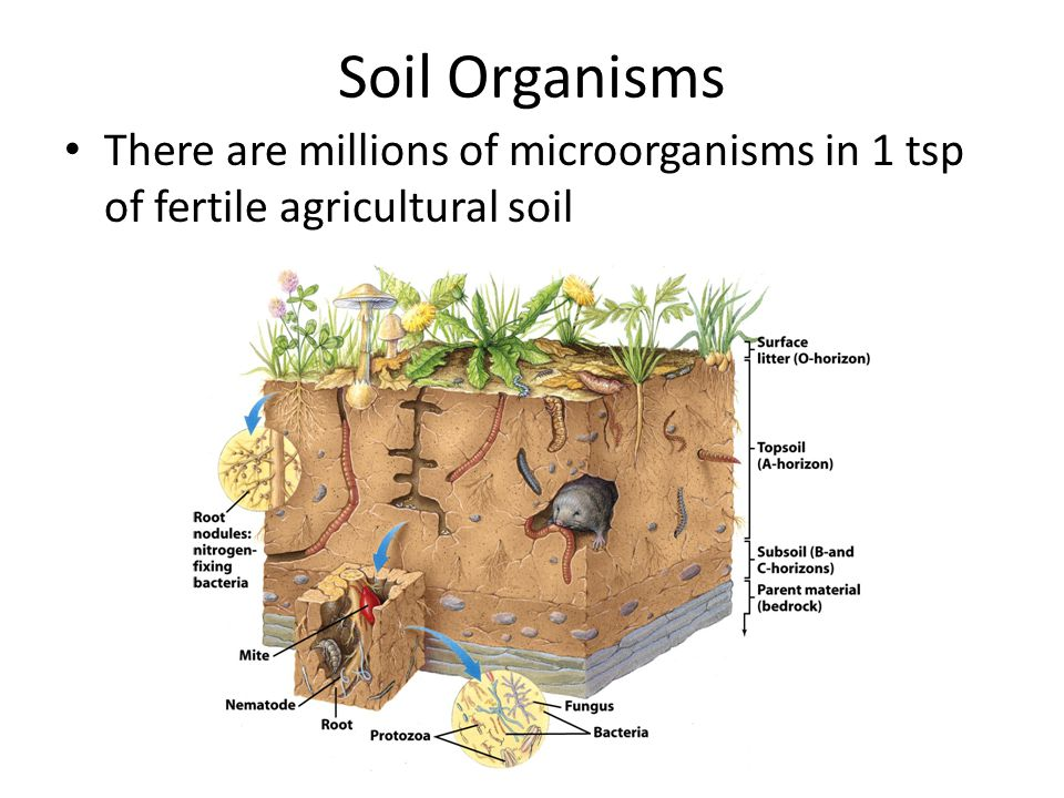 Chapter 15 soil resources ppt video online download for Things in soil
