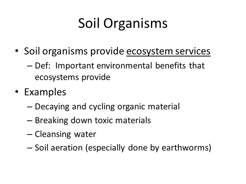 Soil Organisms Soil organisms provide ecosystem services Examples