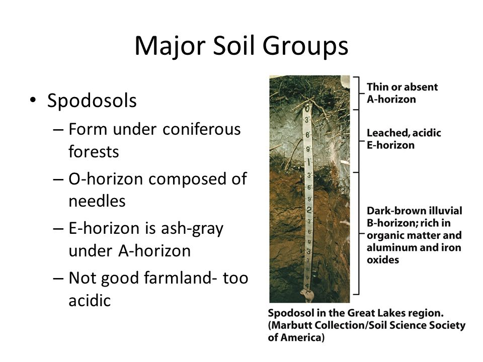 Major Soil Groups Spodosols Form under coniferous forests