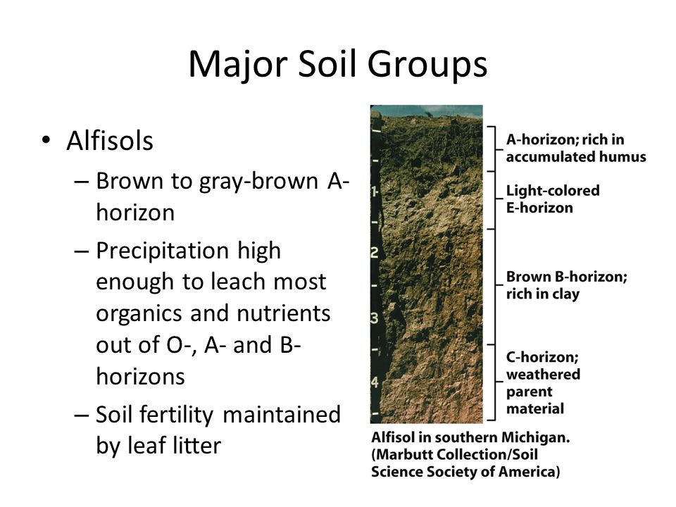 Major Soil Groups Alfisols Brown to gray-brown A-horizon