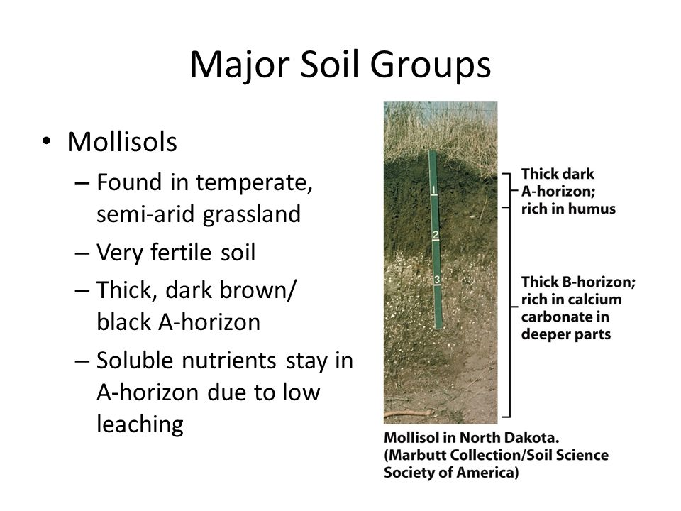 Major Soil Groups Mollisols Found in temperate, semi-arid grassland