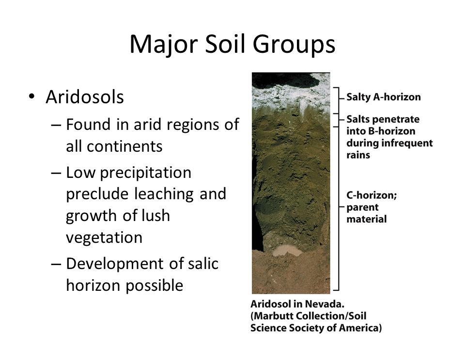 Major Soil Groups Aridosols Found in arid regions of all continents
