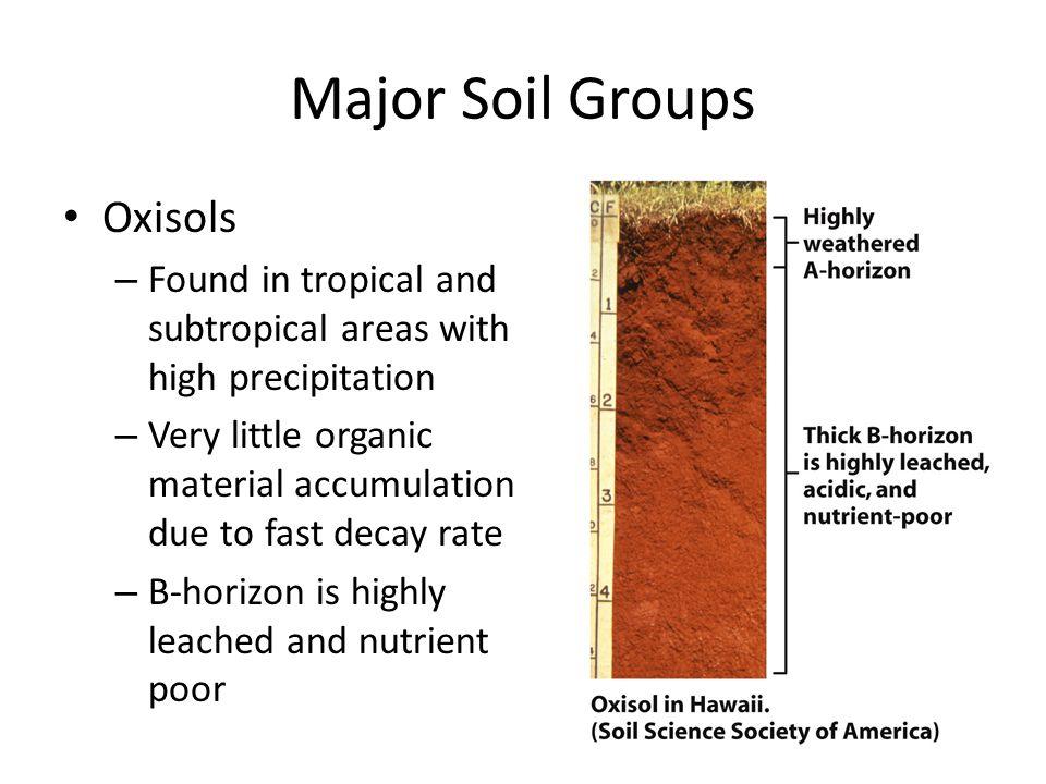 Major Soil Groups Oxisols
