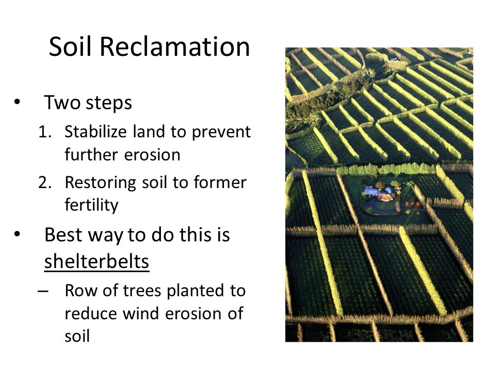 Soil Reclamation Two steps Best way to do this is shelterbelts