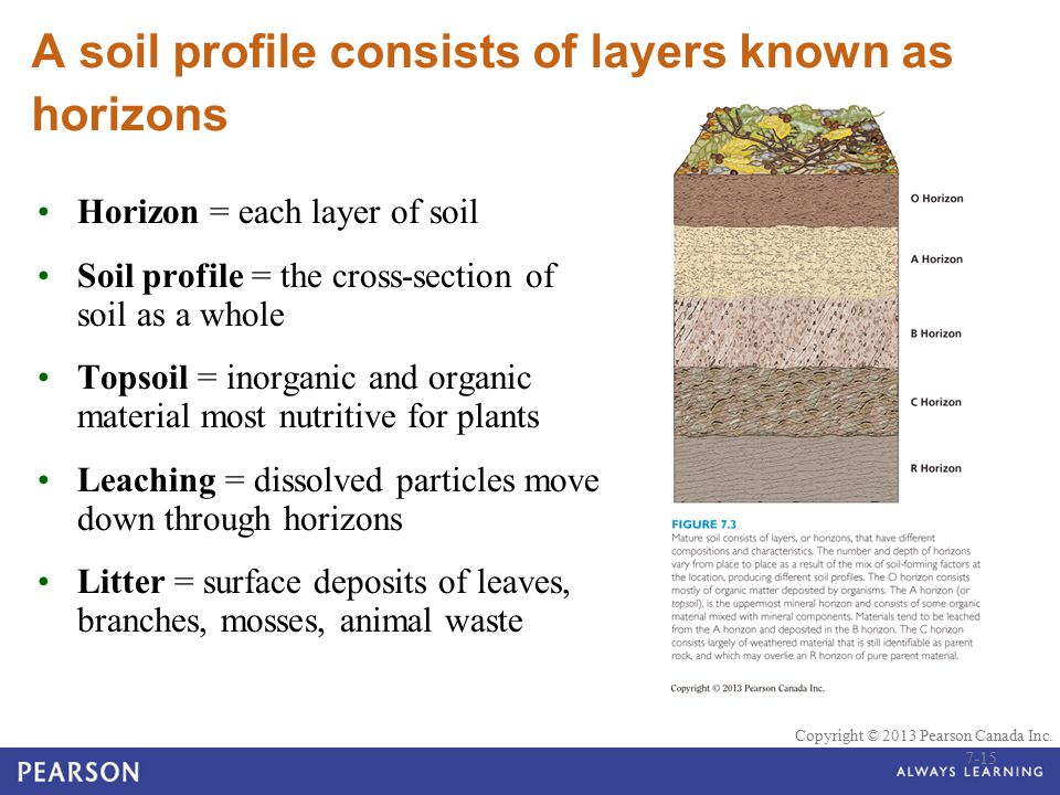 A soil profile consists of layers known as horizons