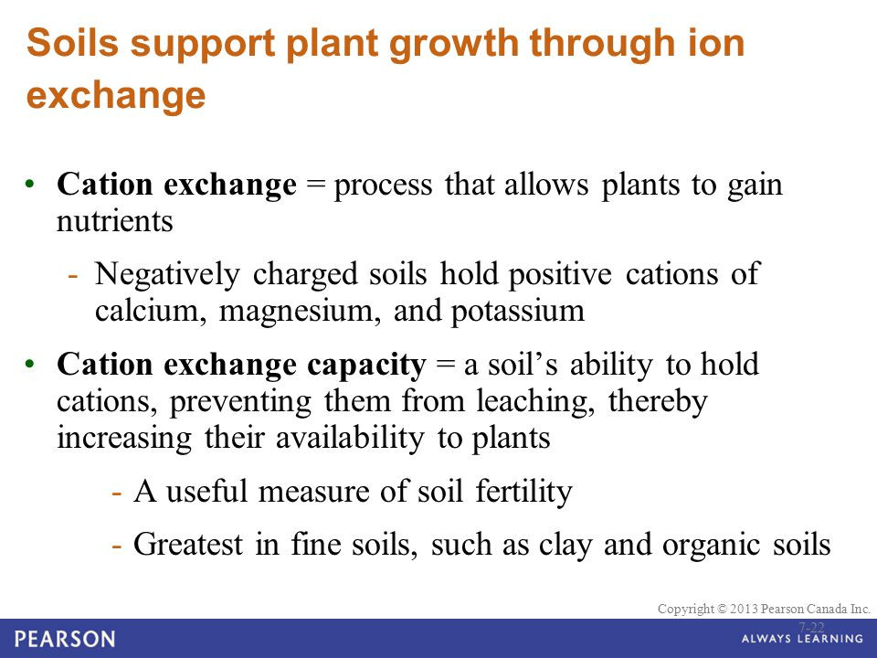 Soils support plant growth through ion exchange