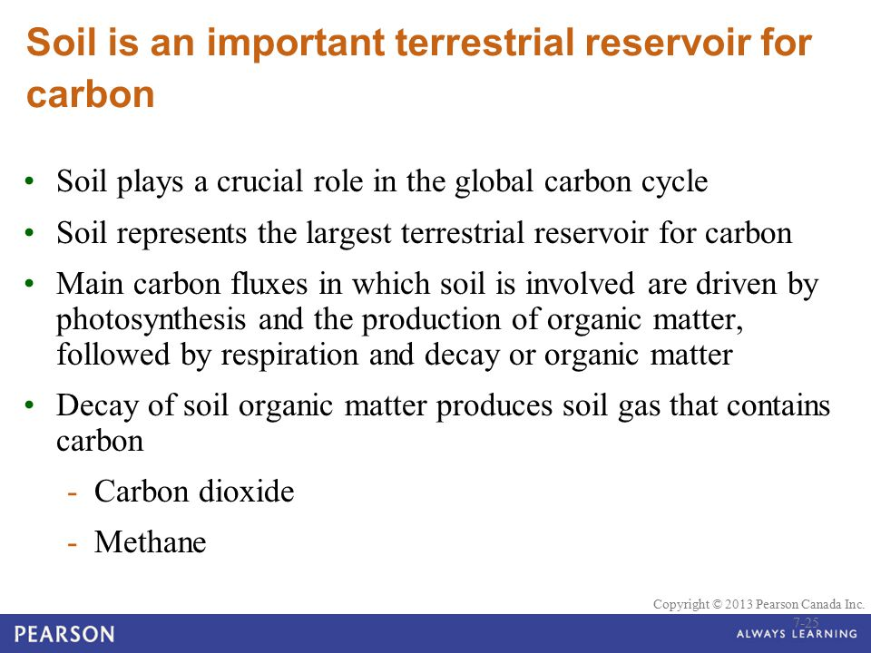 Soil is an important terrestrial reservoir for carbon
