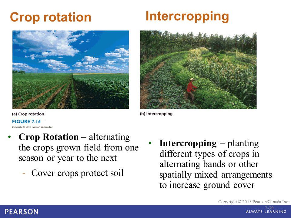 Intercropping Crop rotation
