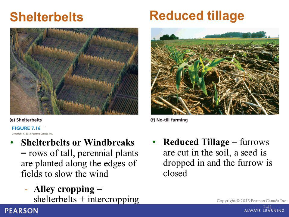 Reduced tillage Shelterbelts