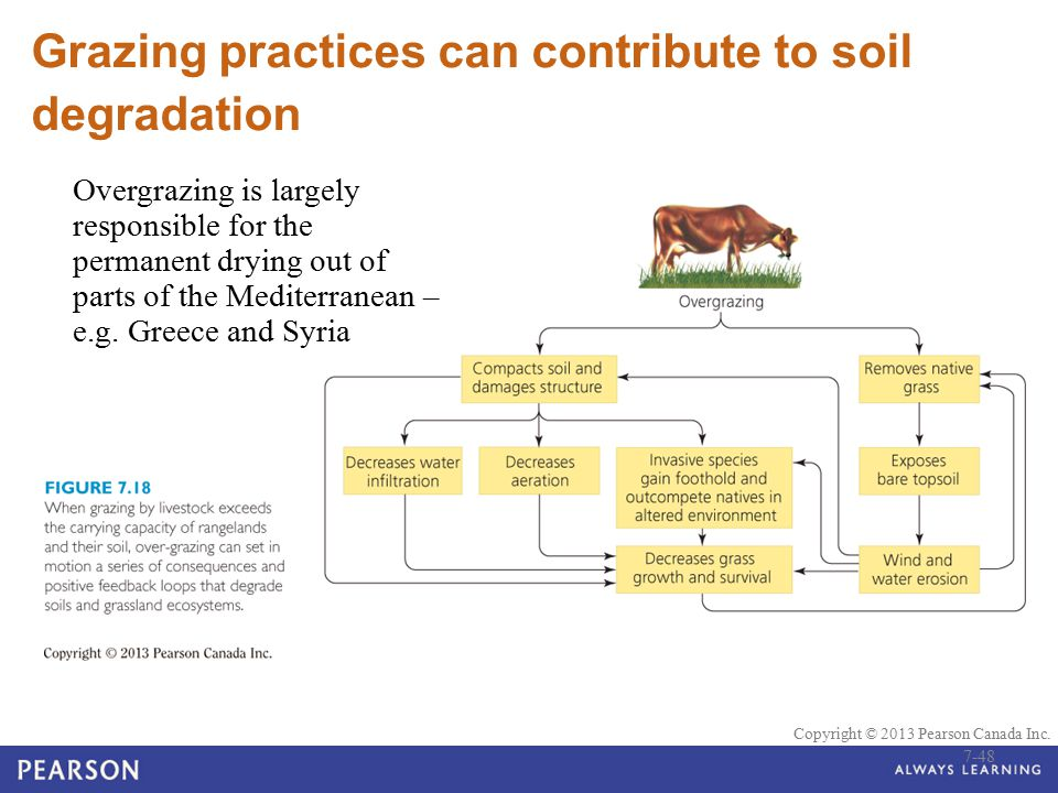 Grazing practices can contribute to soil degradation